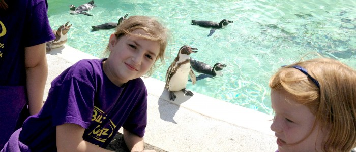 3.cerys penguin